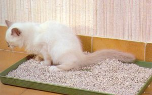 bicarbonate litiere chat