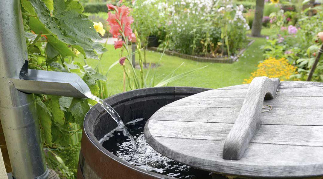 3 astuces simples pour récupérer l'eau de pluie